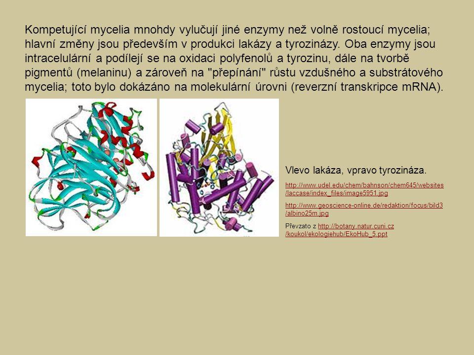 Kompetující mycelia mnohdy vylučují jiné enzymy než volně rostoucí mycelia; hlavní změny jsou především v produkci lakázy a tyrozinázy. Oba enzymy jso