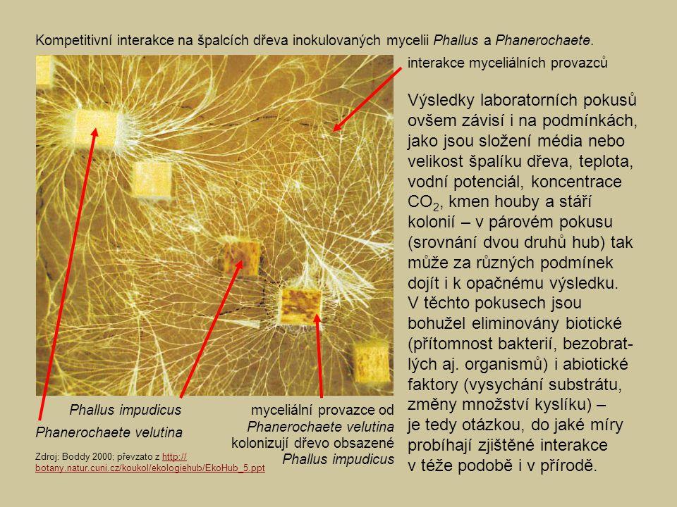 Výsledky laboratorních pokusů ovšem závisí i na podmínkách, jako jsou složení média nebo velikost špalíku dřeva, teplota, vodní potenciál, koncentrace CO 2, kmen houby a stáří kolonií – v párovém pokusu (srovnání dvou druhů hub) tak může za různých podmínek dojít i k opačnému výsledku.