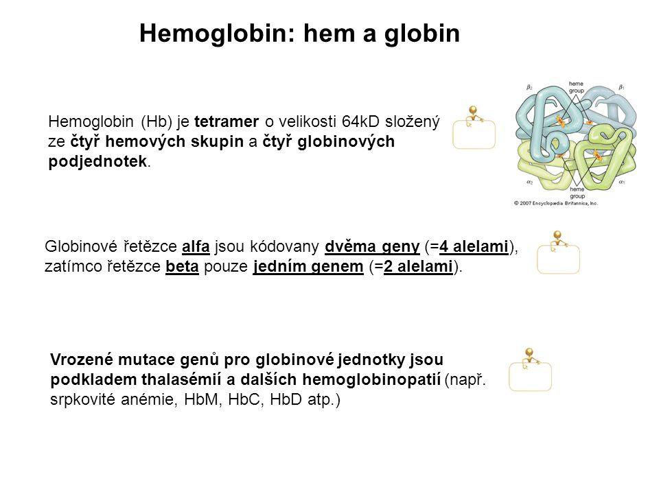 Hemoglobin (Hb) je tetramer o velikosti 64kD složený ze čtyř hemových skupin a čtyř globinových podjednotek. Hemoglobin: hem a globin Globinové řetězc