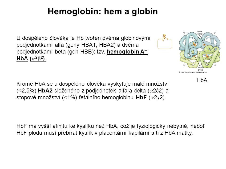 HbA HbF má vyšší afinitu ke kyslíku než HbA, což je fyziologicky nebytné, neboť HbF plodu musí přebírat kyslík v placentární kapilární síti z HbA matk