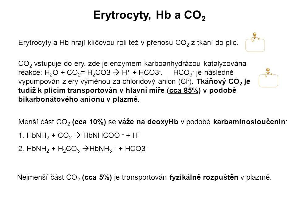 Erytrocyty, Hb a CO 2 Erytrocyty a Hb hrají klíčovou roli též v přenosu CO 2 z tkání do plic. CO 2 vstupuje do ery, zde je enzymem karboanhydrázou kat