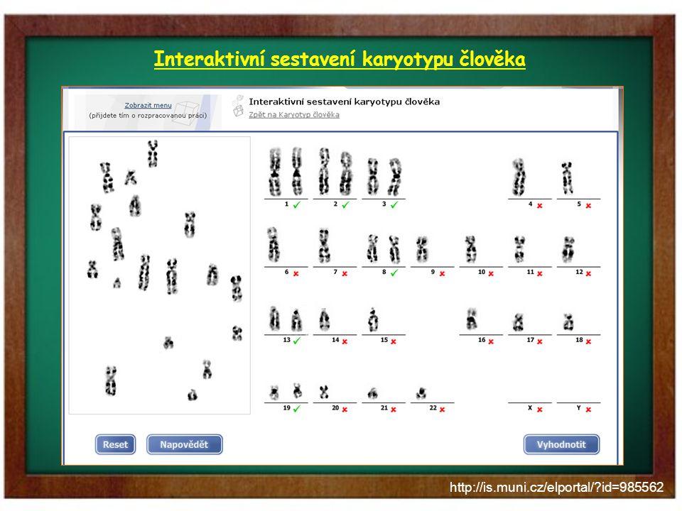 http://is.muni.cz/elportal/?id=985562 Interaktivní sestavení karyotypu člověka