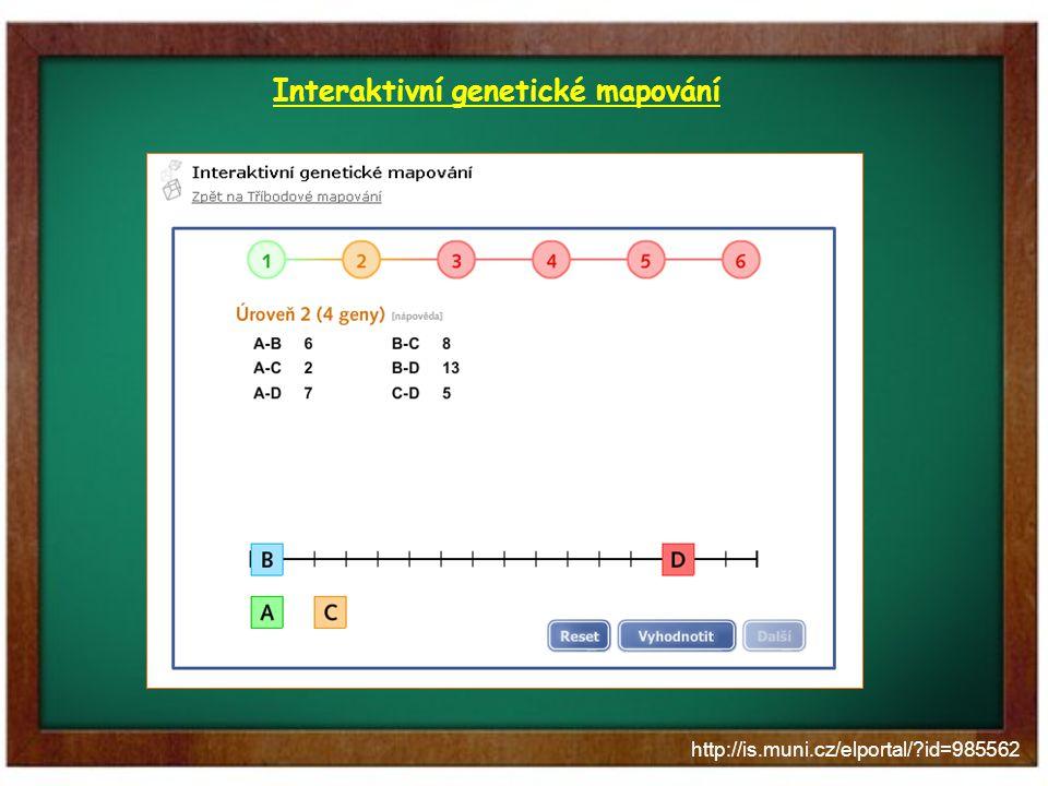 http://is.muni.cz/elportal/?id=985562 Interaktivní genetické mapování Popis záměru: mapování genů na chromozomu formou hry lokalizovat 3 až 8 genů (6 úrovní) program bude vyhodnocovat splnění Materiály: vzdálenosti mezi jednotlivými dvojicemi genů (80 dvojic) správné pořadí a vzdálenosti mezi nimi Přínos: zábavnou formou se studenti připraví na řešení obtížnějšího mapovacího úkolu ve skriptech Problémy: odladit správné měření vzdáleností mezi geny