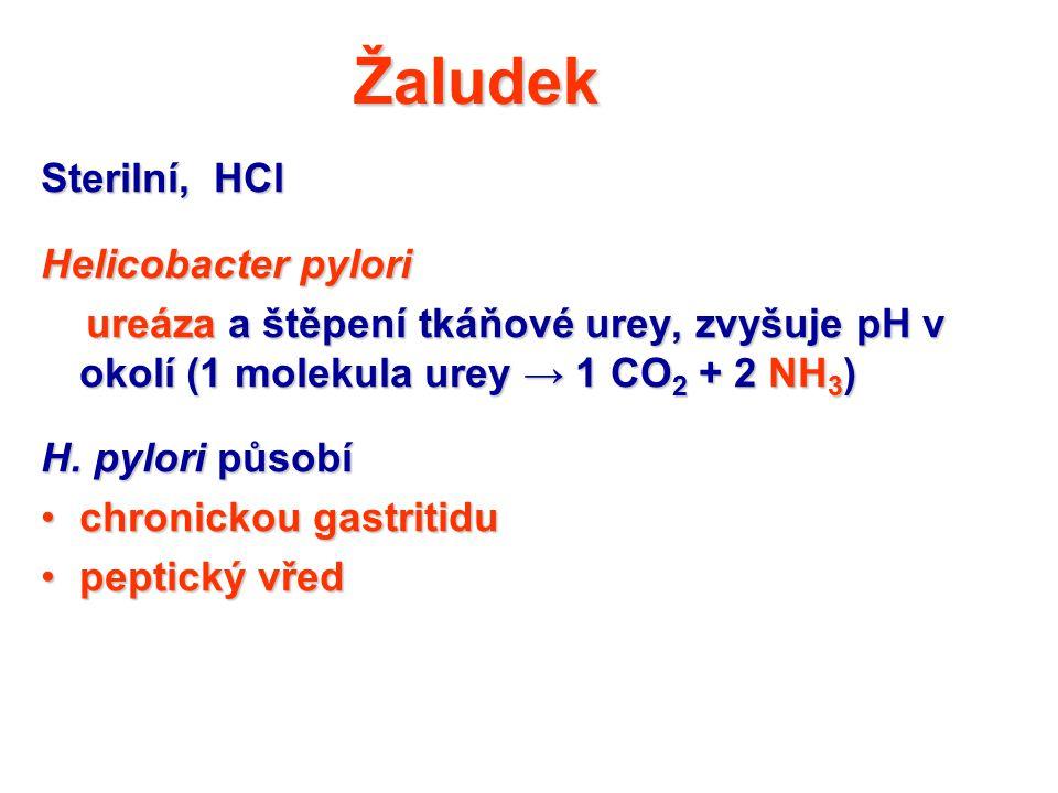 Žaludek Sterilní, HCl Helicobacter pylori ureáza a štěpení tkáňové urey, zvyšuje pH v okolí (1 molekula urey → 1 CO 2 + 2 NH 3 ) ureáza a štěpení tkáň
