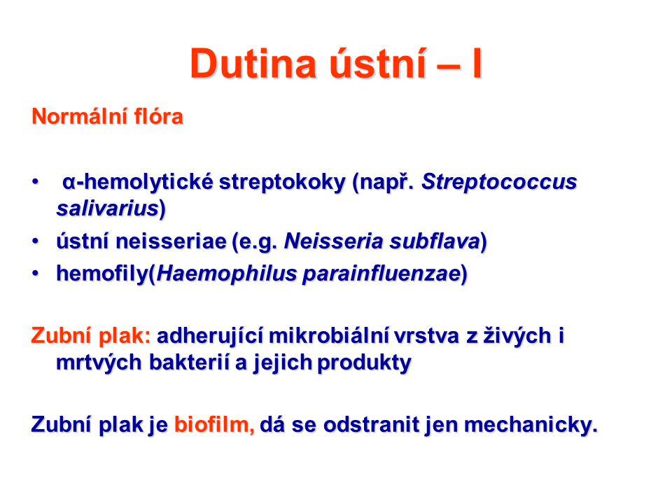 Dutina ústní – I Normální flóra α-hemolytické streptokoky (např. Streptococcus salivarius) α-hemolytické streptokoky (např. Streptococcus salivarius)