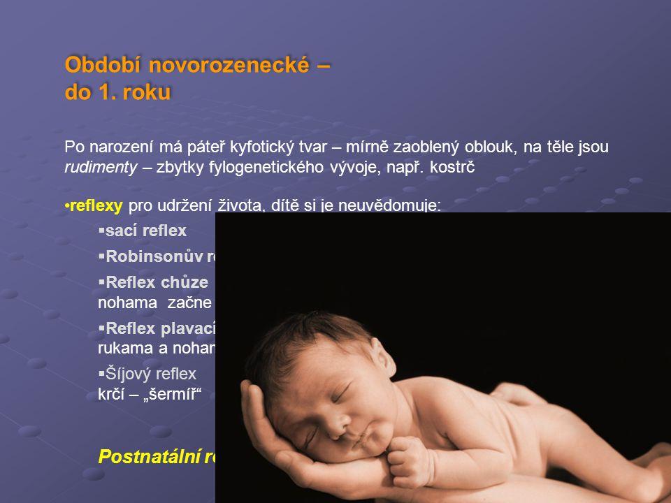© Tom Vespa Období novorozenecké – do 1. roku Po narození má páteř kyfotický tvar – mírně zaoblený oblouk, na těle jsou rudimenty – zbytky fylogenetic