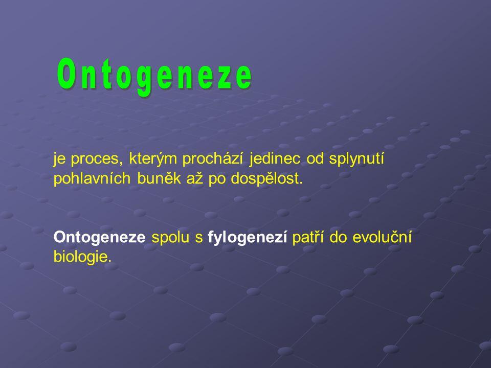 je proces, kterým prochází jedinec od splynutí pohlavních buněk až po dospělost. Ontogeneze spolu s fylogenezí patří do evoluční biologie.