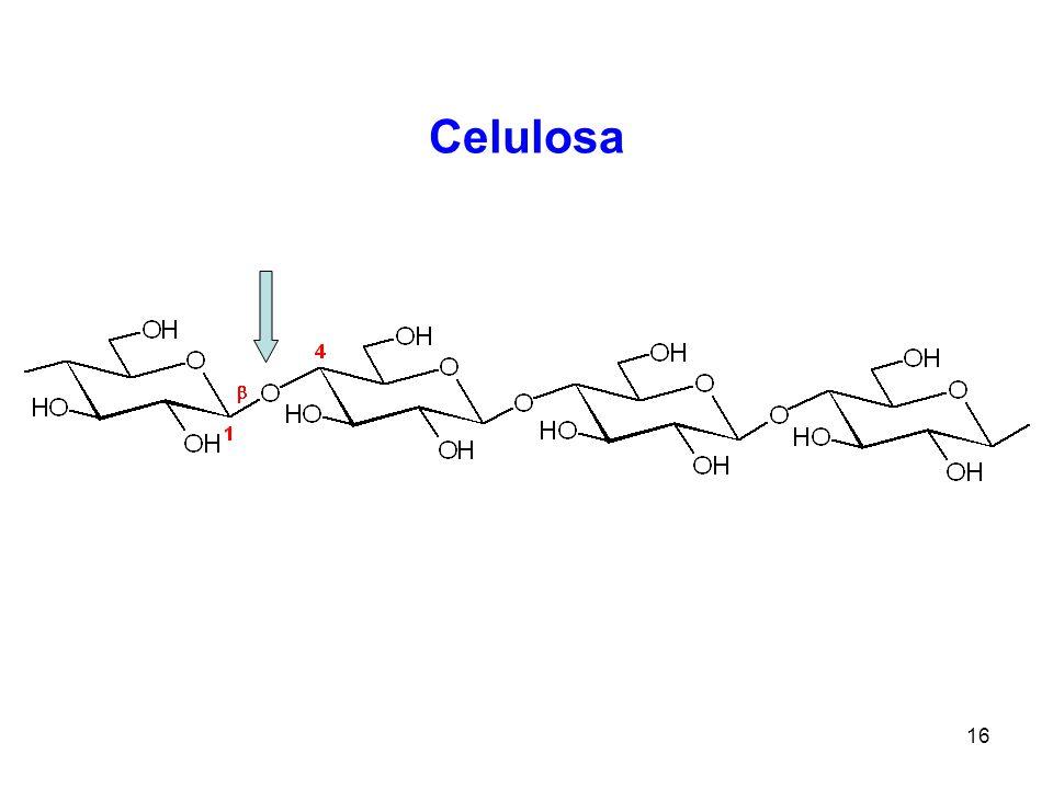 16 Celulosa