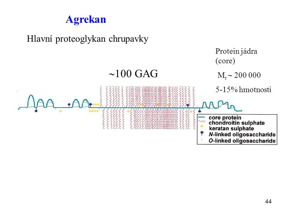 44 Agrekan Hlavní proteoglykan chrupavky  100 GAG Protein jádra (core) M r  200 000 5-15% hmotnosti