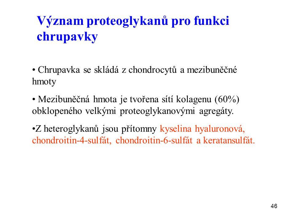 46 Význam proteoglykanů pro funkci chrupavky Chrupavka se skládá z chondrocytů a mezibuněčné hmoty Mezibuněčná hmota je tvořena sítí kolagenu (60%) obklopeného velkými proteoglykanovými agregáty.