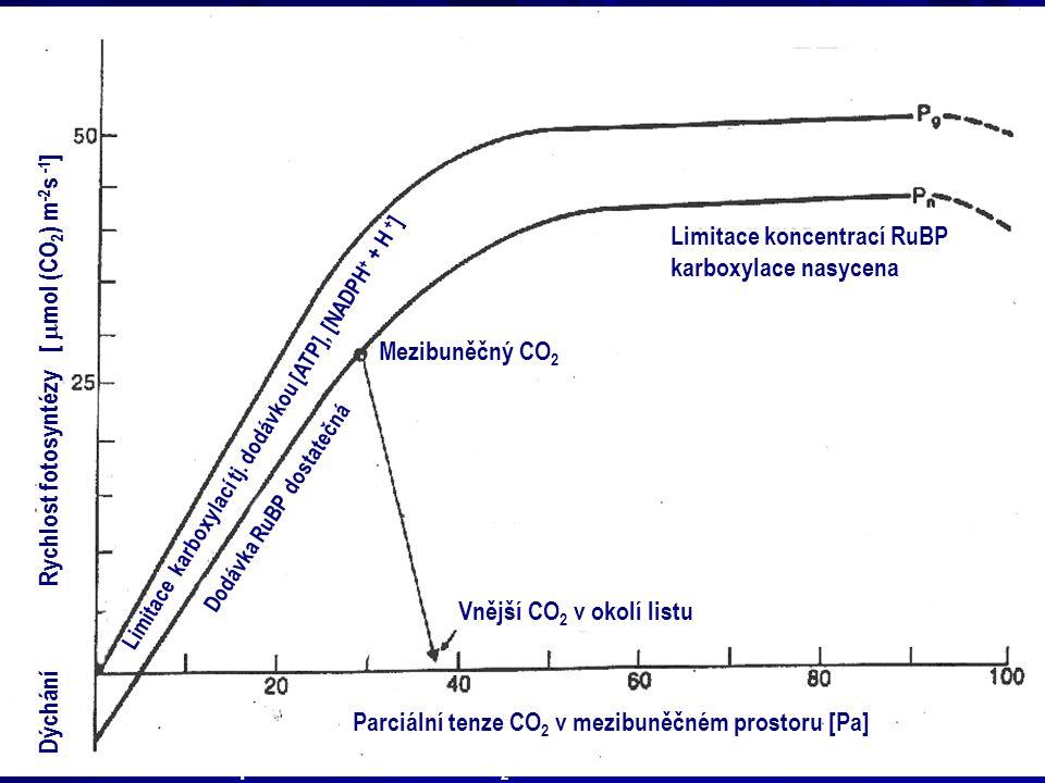 Dýchání Rychlost fotosyntézy [  mol (CO 2 ) m -2 s -1 ] Limitace karboxylací tj. dodávkou [ATP], [NADPH + + H + ] Dodávka RuBP dostatečná Mezibuněčný