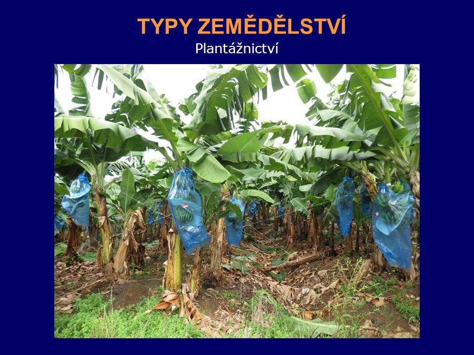 Plantážnictví TYPY ZEMĚDĚLSTVÍ