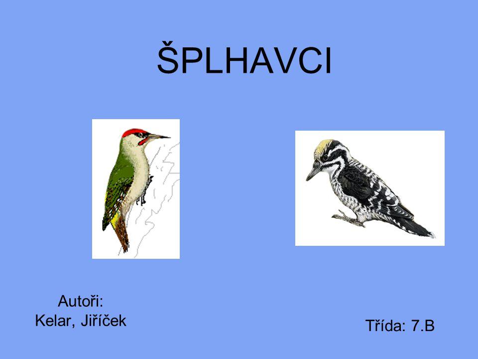 ŠPLHAVCI Autoři: Kelar, Jiříček Třída: 7.B