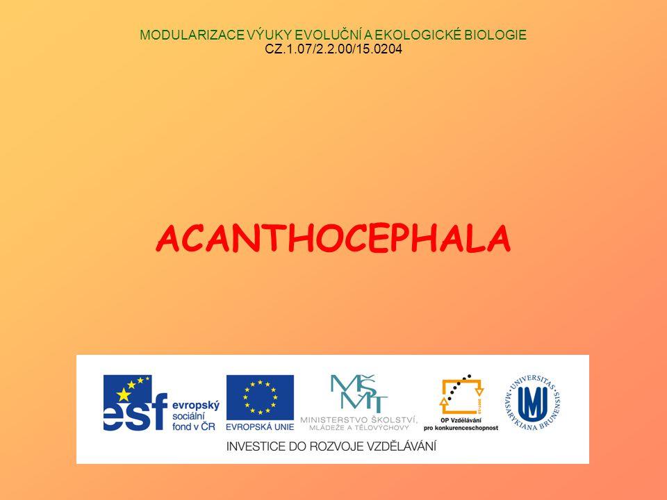 MODULARIZACE VÝUKY EVOLUČNÍ A EKOLOGICKÉ BIOLOGIE CZ.1.07/2.2.00/15.0204 ACANTHOCEPHALA