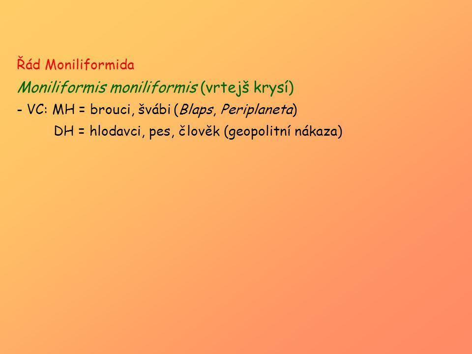 Řád Moniliformida Moniliformis moniliformis (vrtejš krysí) - VC: MH = brouci, švábi (Blaps, Periplaneta) DH = hlodavci, pes, člověk (geopolitní nákaza