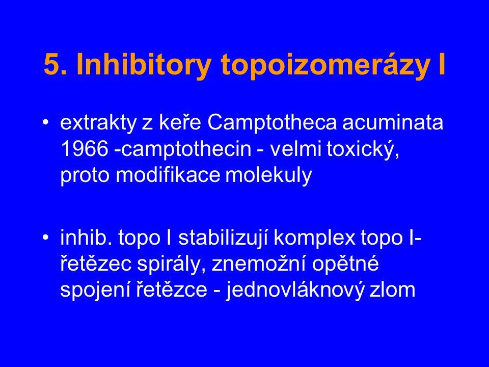 5. Inhibitory topoizomerázy I extrakty z keře Camptotheca acuminata 1966 -camptothecin - velmi toxický, proto modifikace molekuly inhib. topo I stabil