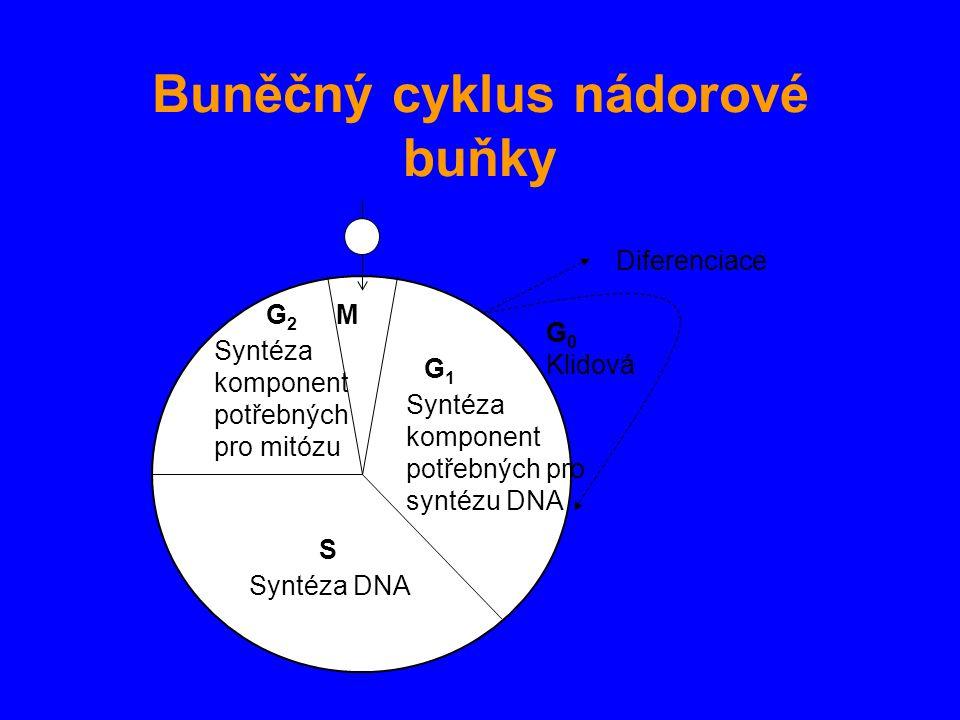 Buněčný cyklus nádorové buňky G 0 Klidová Diferenciace G1G1 Syntéza komponent potřebných pro syntézu DNA MG2G2 Syntéza komponent potřebných pro mitózu