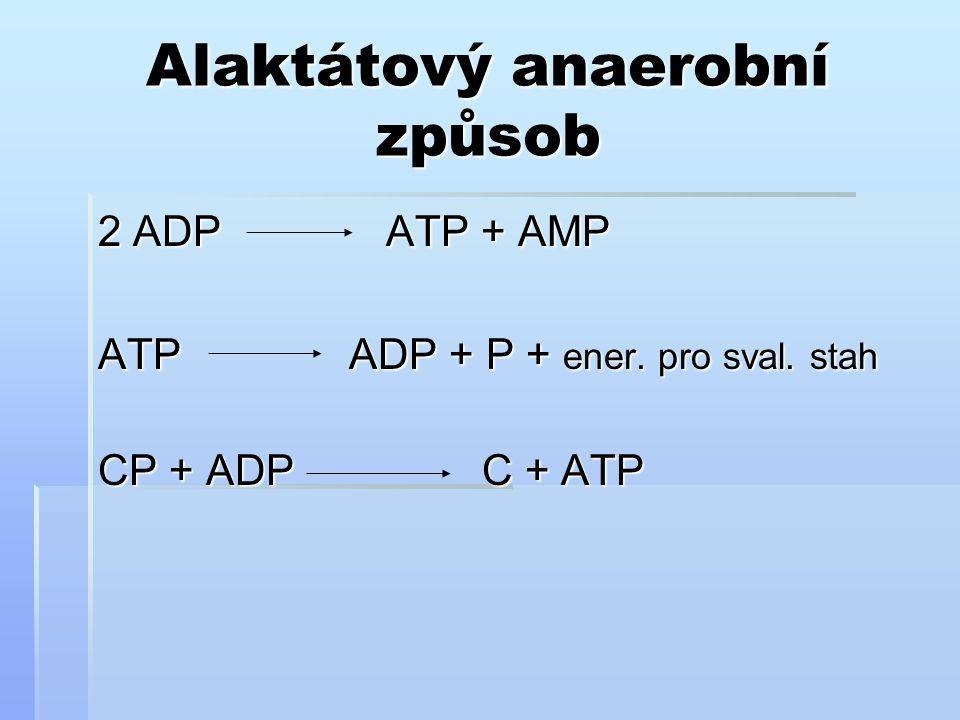 Alaktátový anaerobní způsob 2 ADPATP + AMP ATP ADP + P + ener. pro sval. stah CP + ADP C + ATP