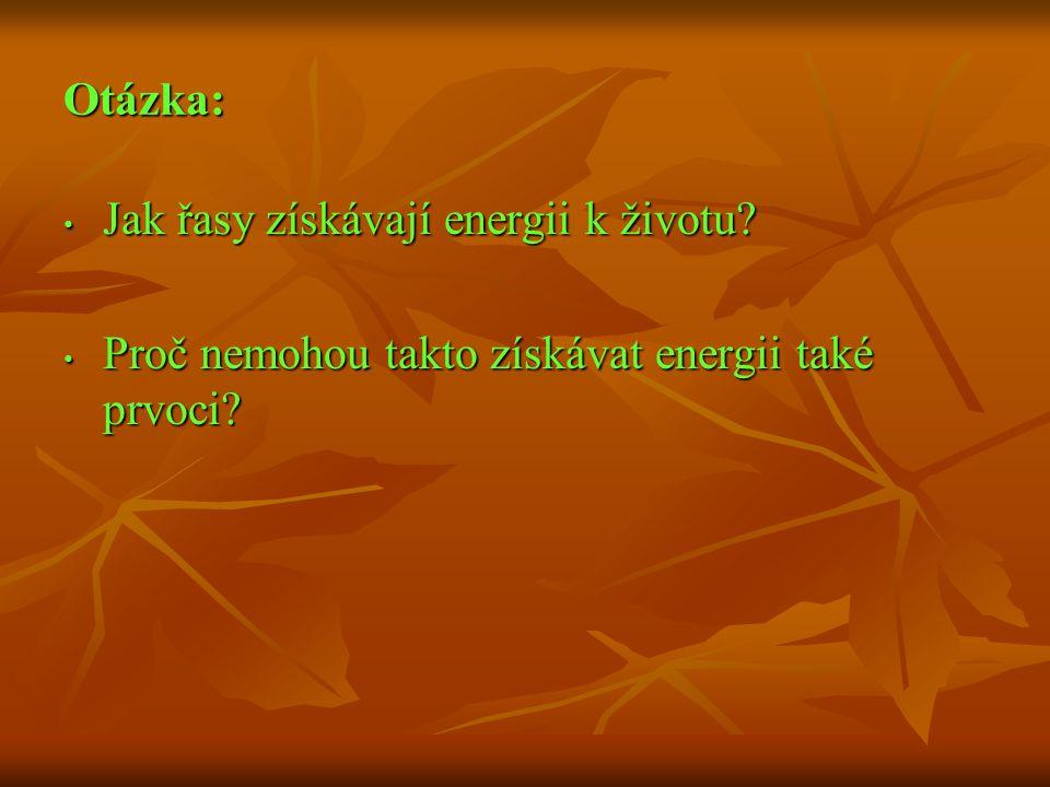 Otázka: Jak řasy získávají energii k životu? Jak řasy získávají energii k životu? Proč nemohou takto získávat energii také prvoci? Proč nemohou takto