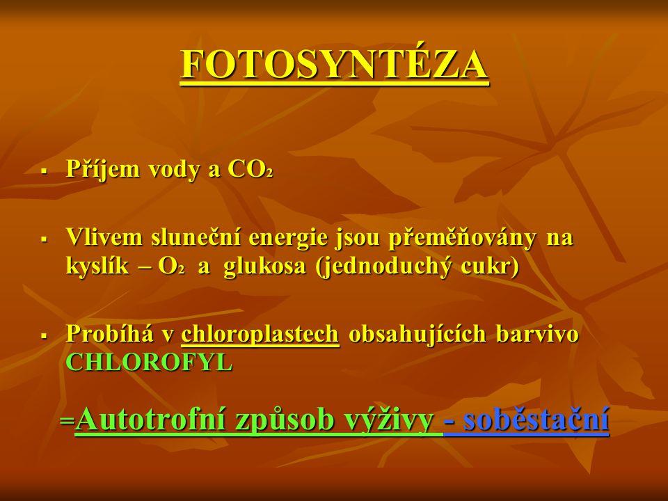 FOTOSYNTÉZA  Příjem vody a CO 2  Vlivem sluneční energie jsou přeměňovány na kyslík – O 2 a glukosa (jednoduchý cukr)  Probíhá v chloroplastech obs