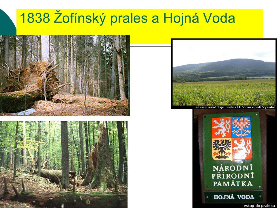 """Žofínský prales  Zdejší rezervace o původní výměře 3ha, byla vyhlášena nařízením hraběte Jiřího Buquoye roku 1838:  """"...vzhledem k tomu, že lesy těchto vlastností budou známy brzy jen z historického líčení, rozhodl jsem se zachovati zmíněnou lesní část jako památník dávno minulých dob názornému požitku pravých přátel přírody, vzdáti se v ní veškerého lesnického těžení, aby se v této části žádné dříví nekácelo, stelivo se nebralo a drobné dříví se nevybíralo;zkrátka vše ponecháno bylo v dnešním stavu."""