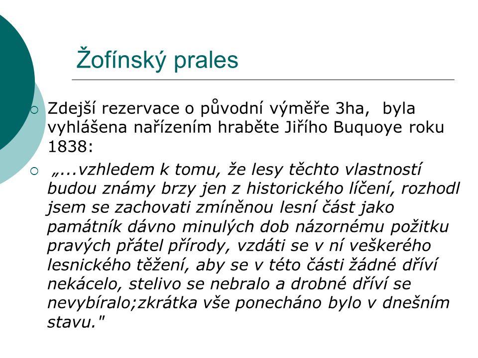 """Žofínský prales  Zdejší rezervace o původní výměře 3ha, byla vyhlášena nařízením hraběte Jiřího Buquoye roku 1838:  """"...vzhledem k tomu, že lesy těc"""