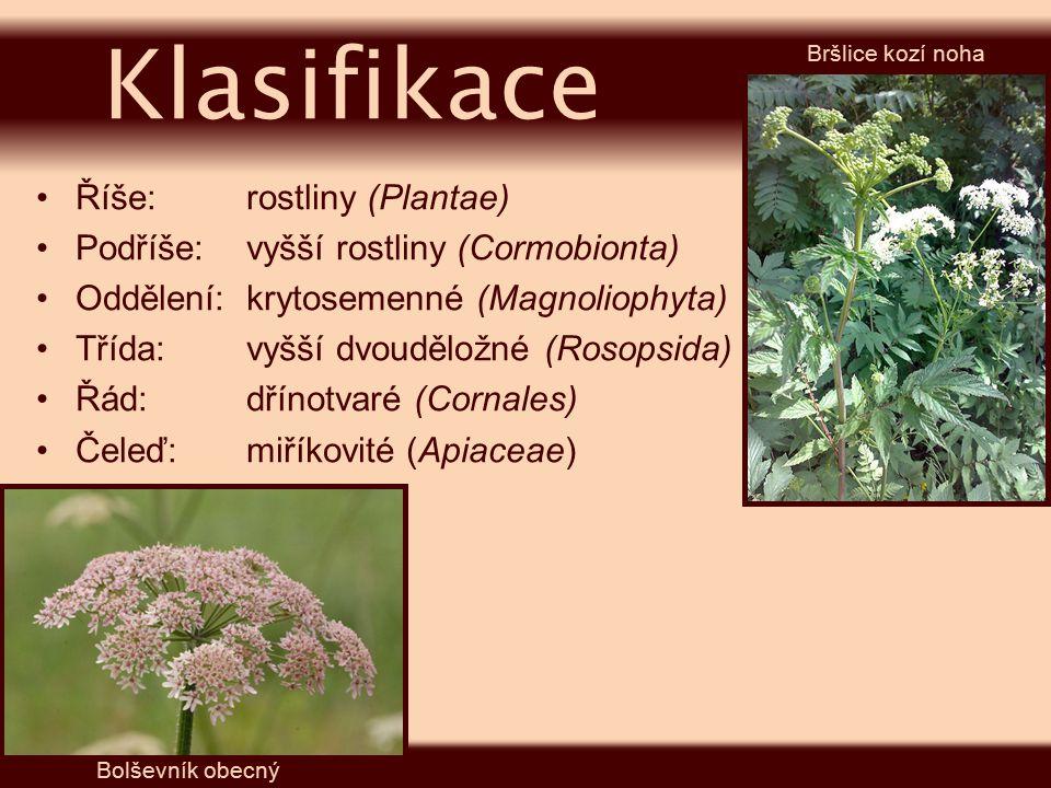 Říše:rostliny (Plantae) Podříše:vyšší rostliny (Cormobionta) Oddělení:krytosemenné (Magnoliophyta) Třída:vyšší dvouděložné (Rosopsida) Řád:dřínotvaré