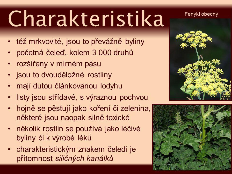 jsou drobné, většinou bílé, oboupohlavní opyluje je hmyz květenství je zpravidla složený okolík (popř.