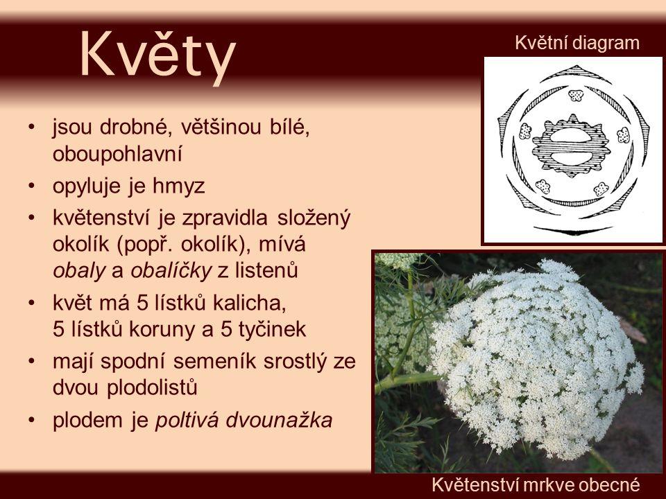 jsou drobné, většinou bílé, oboupohlavní opyluje je hmyz květenství je zpravidla složený okolík (popř. okolík), mívá obaly a obalíčky z listenů květ m