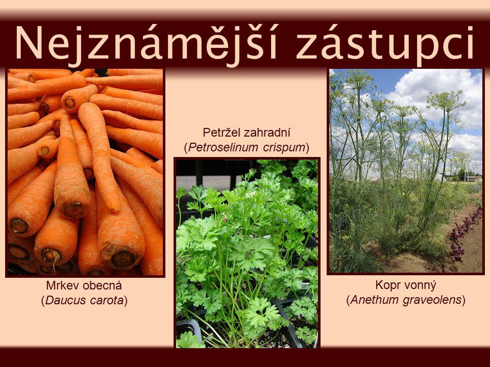 Bolševník obecný (Heracleum sphondylium) Bršlice kozí noha (Aegopodium podagraria) Bolehlav plamatý (Conium maculatum) Nejznám ě jší zástupci