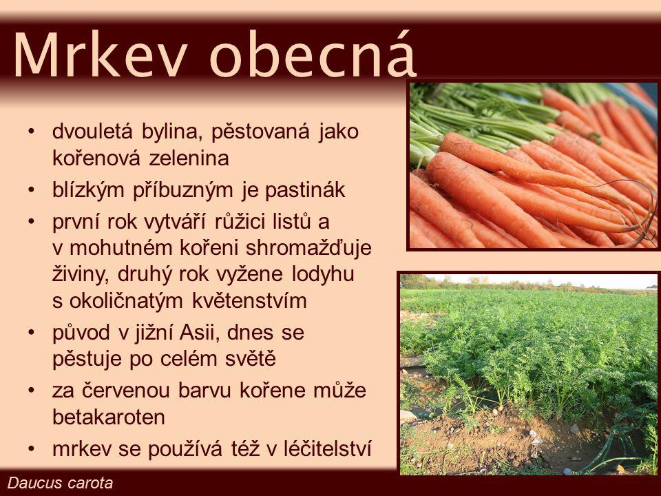dvouletá rostlina původ v jižní Evropě v potravinářství se používá nať (koření) i kořen (zelenina) první rok vytváří růžici listů a shromažďuje zásoby ve ztloustlém hlavním kořeni, druhý rok vyžene mohutnou lodyhu s okoličnatým květenstvím Petr ž el zahradní Petroselinum crispum