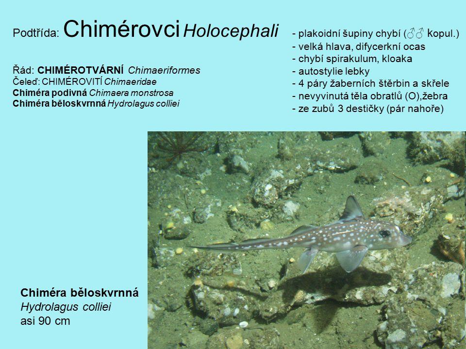 benktonofágové predátoři: malá kořist (malé ryby, hlavonožci) ž.skvrnitý,šotek,mako,máčky,ž.liščí velká k.