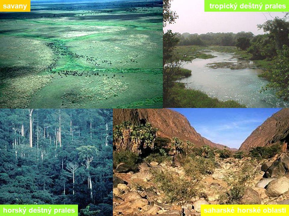 horský deštný pralessaharské horské oblasti savany tropický deštný prales