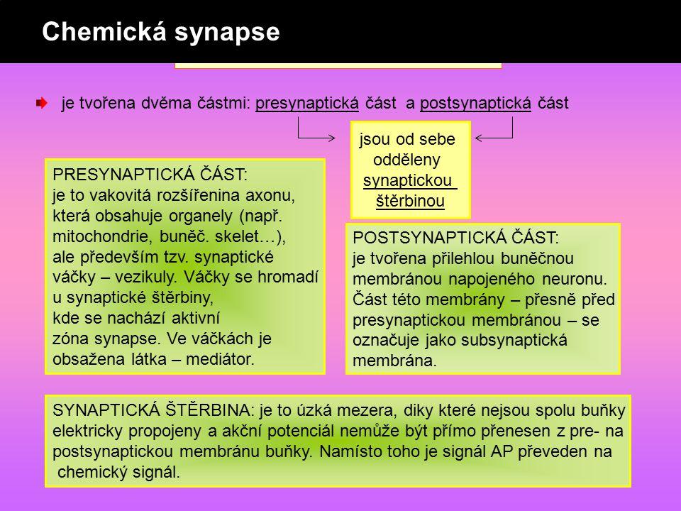 CHEMICKÁ SYNAPSE je tvořena dvěma částmi: presynaptická část a postsynaptická část jsou od sebe odděleny synaptickou štěrbinou PRESYNAPTICKÁ ČÁST: je