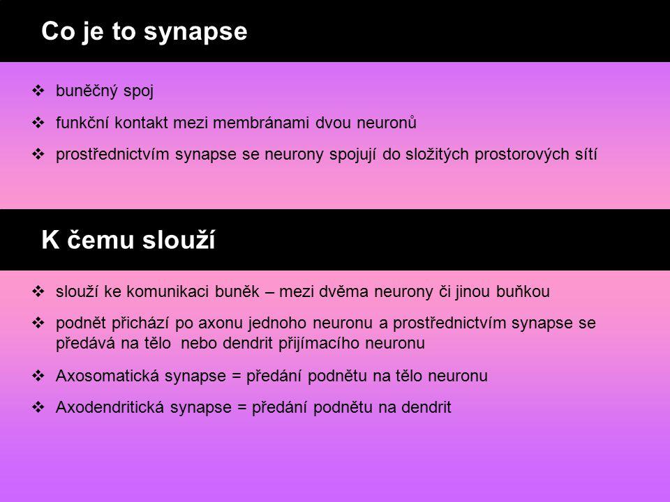 Co je synapse ? K čemu slouží synapse ?  buněčný spoj  funkční kontakt mezi membránami dvou neuronů  slouží ke komunikaci buněk – mezi dvěma neuron