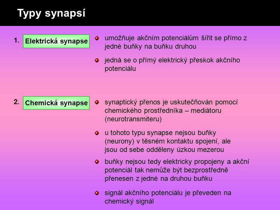 Typy synapsí 1. Elektrická synapse Chemická synapse 2. umožňuje akčním potenciálům šířit se přímo z jedné buňky na buňku druhou jedná se o přímý elekt