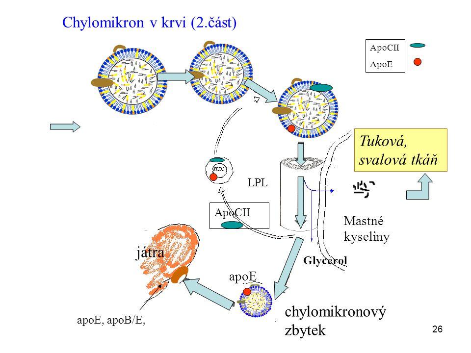 26 játra Mastné kyseliny LPL ApoCII ApoE ApoCII Glycerol chylomikronový zbytek Chylomikron v krvi (2.část) Tuková, svalová tkáň apoE, apoB/E, apoE