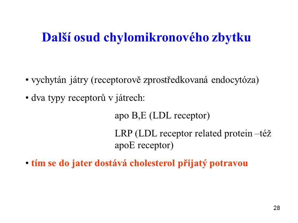 28 Další osud chylomikronového zbytku vychytán játry (receptorově zprostředkovaná endocytóza) dva typy receptorů v játrech: apo B,E (LDL receptor) LRP