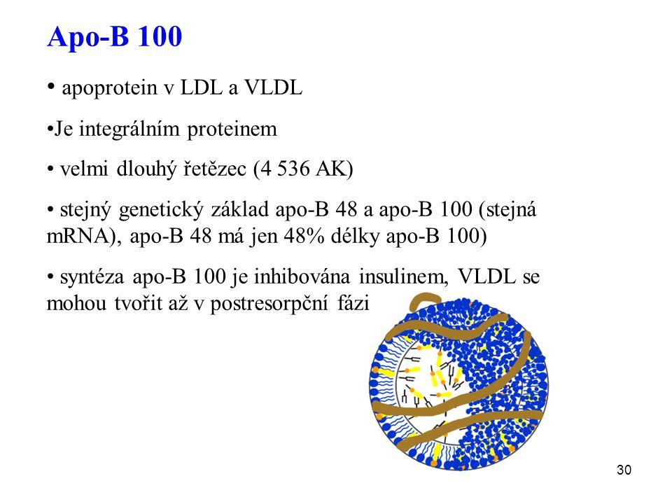 30 Apo-B 100 apoprotein v LDL a VLDL Je integrálním proteinem velmi dlouhý řetězec (4 536 AK) stejný genetický základ apo-B 48 a apo-B 100 (stejná mRN