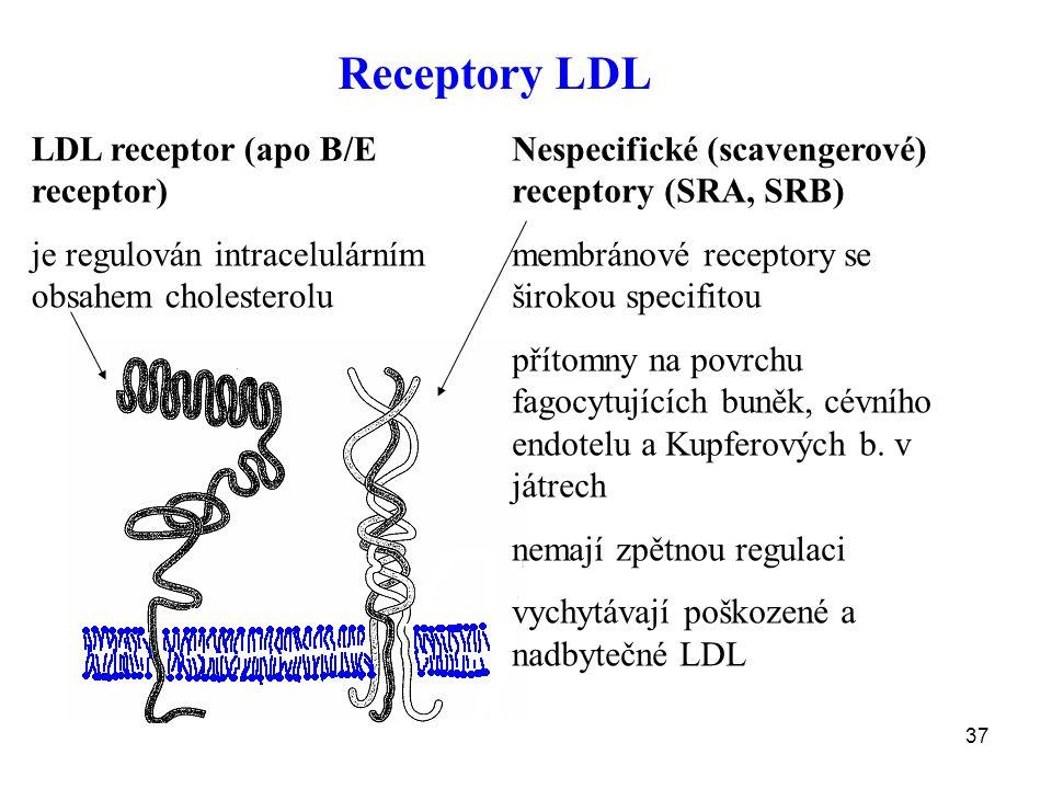 37 LDL receptor (apo B/E receptor) je regulován intracelulárním obsahem cholesterolu Nespecifické (scavengerové) receptory (SRA, SRB) membránové recep