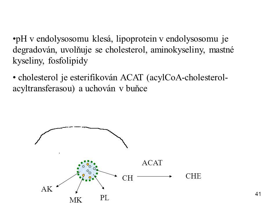 41 pH v endolysosomu klesá, lipoprotein v endolysosomu je degradován, uvolňuje se cholesterol, aminokyseliny, mastné kyseliny, fosfolipidy cholesterol