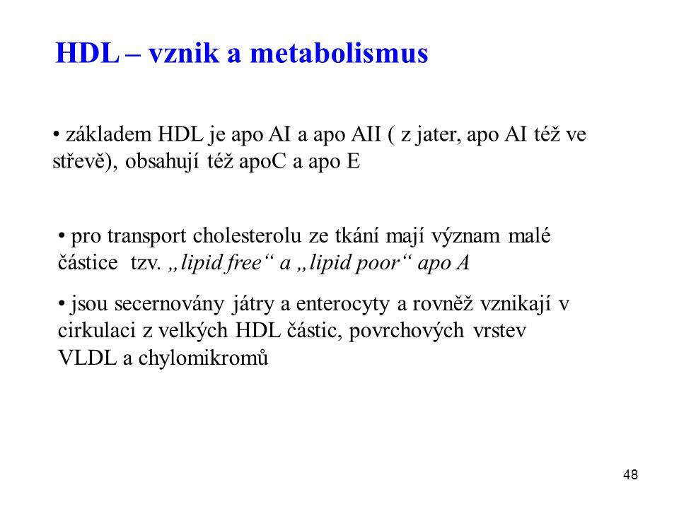 48 HDL – vznik a metabolismus základem HDL je apo AI a apo AII ( z jater, apo AI též ve střevě), obsahují též apoC a apo E pro transport cholesterolu