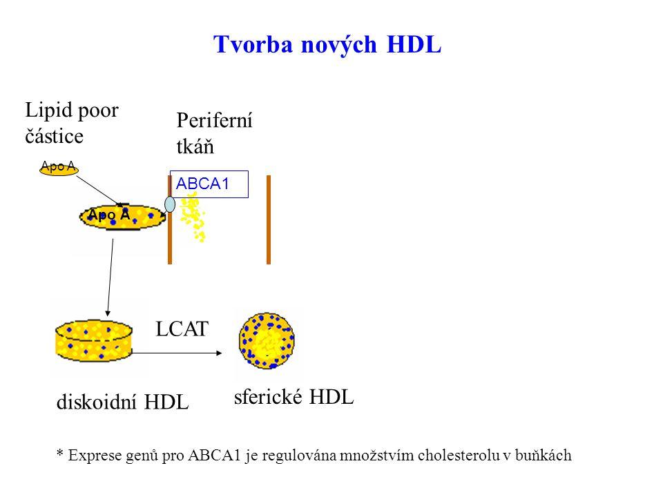 50 SR-B1 játra CETP LDL/VLDL steroidogenní tkáně Lipid poor částice sferické HDL Tvorba nových HDL Periferní tkáň ABCA1 LCAT diskoidní HDL * Exprese g