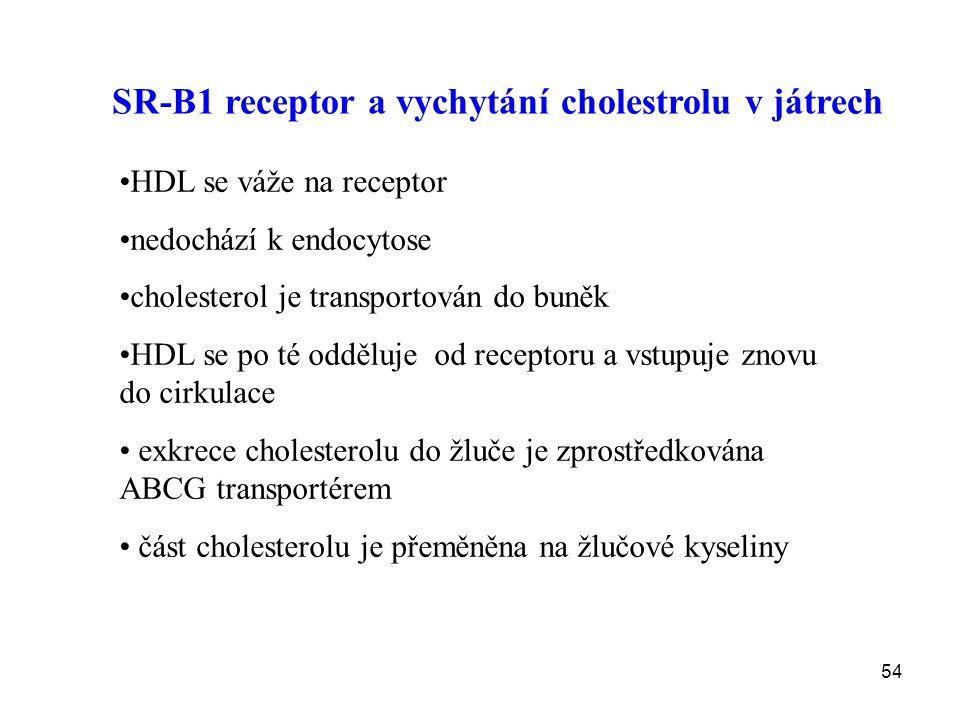 54 SR-B1 receptor a vychytání cholestrolu v játrech HDL se váže na receptor nedochází k endocytose cholesterol je transportován do buněk HDL se po té
