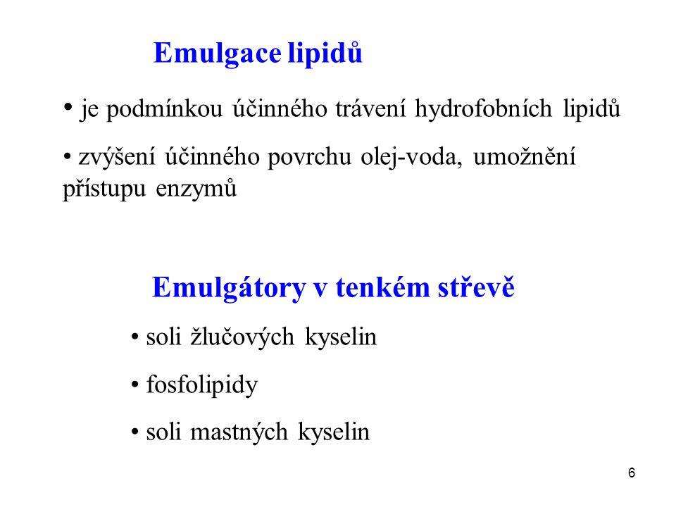 6 Emulgace lipidů je podmínkou účinného trávení hydrofobních lipidů zvýšení účinného povrchu olej-voda, umožnění přístupu enzymů Emulgátory v tenkém s