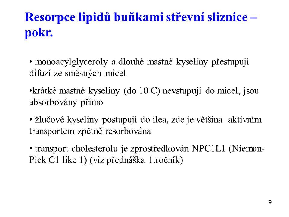 10 Hormonální kontrola trávení lipidů Sekretin Je secernován do krve S-buňkami duodena po stimulaci H + v lumen indukuje sekreci HCO 3 - z pankreatu Cholecystokinin je secernován I-buňkami duodena po stimulaci malými peptidy, AK, mastnými kyselinami v lumen sekrece amylasy, lipasy a proteas z pankreatu potencuje účinek sekretinu na vylučování HCO 3 - sekrece žlučových kyselin ze žlučníku