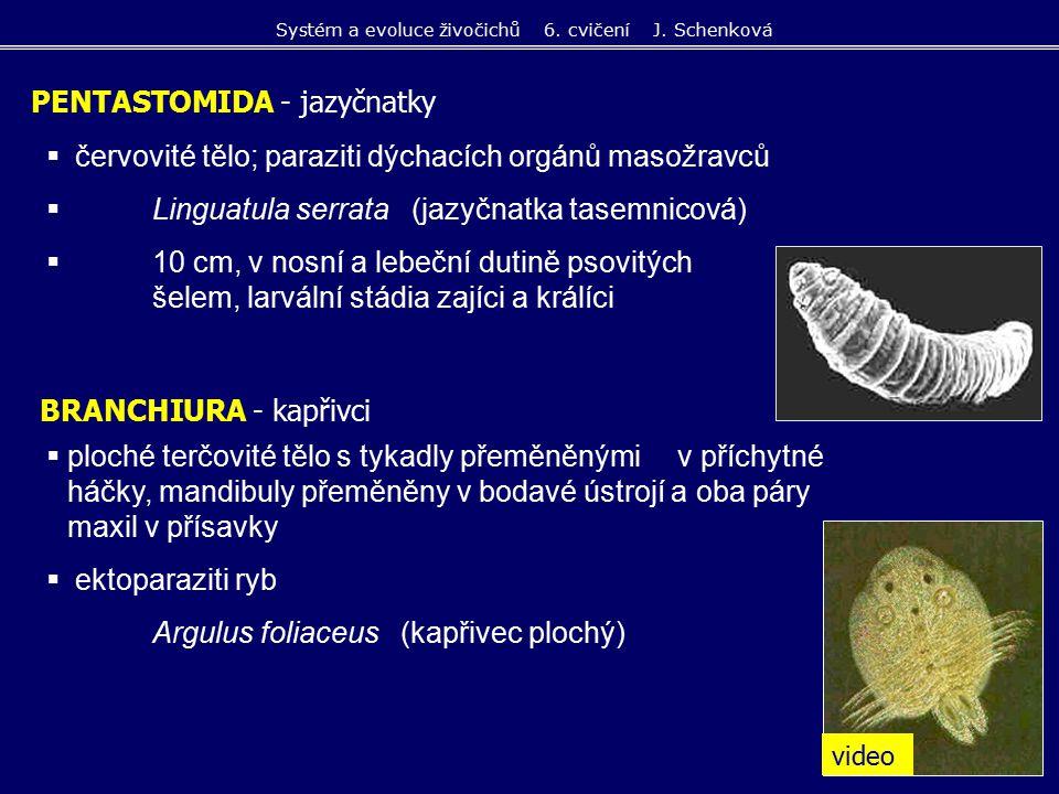  červovité tělo; paraziti dýchacích orgánů masožravců  Linguatula serrata (jazyčnatka tasemnicová)  10 cm, v nosní a lebeční dutině psovitých šelem