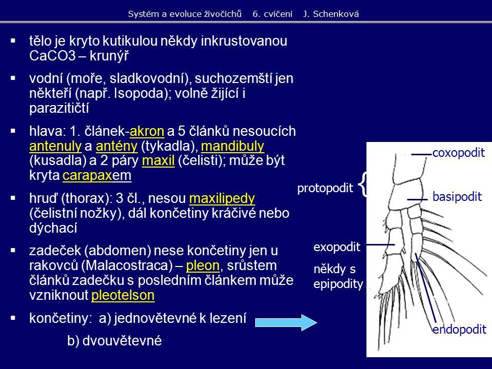  tělo je kryto kutikulou někdy inkrustovanou CaCO3 – krunýř  vodní (moře, sladkovodní), suchozemští jen někteří (např. Isopoda); volně žijící i para