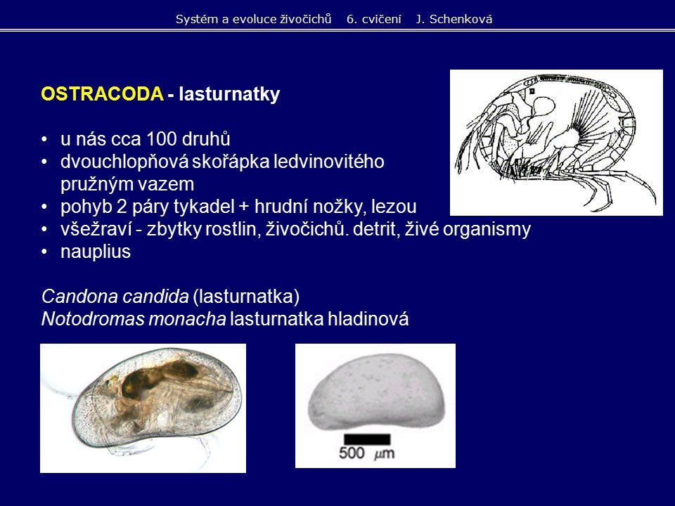 OSTRACODA - lasturnatky u nás cca 100 druhů dvouchlopňová skořápka ledvinovitého tvaru s pružným vazem pohyb 2 páry tykadel + hrudní nožky, lezou všež