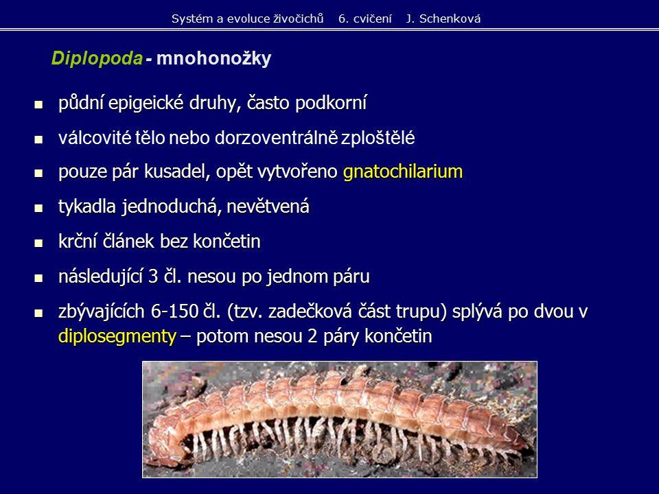 Polyxenus lagurus (chlupule podkorní) 2 mm, nesklerotizované měkké tělo Glomeris pustulata (svinule lesní) schopnost volvace, spíše na otevřených stanovištích Polydesmus complanatus (plochule křehká) v opadance vlhkých listnatých lesů, dorzoventrálně zploštělé tělo, trupové články mají postranní křidélka čeleď Julidae - protáhlé dlouhé tělo kruhového průřezu, telson většinou s ocáskem Systém a evoluce živočichů 6.